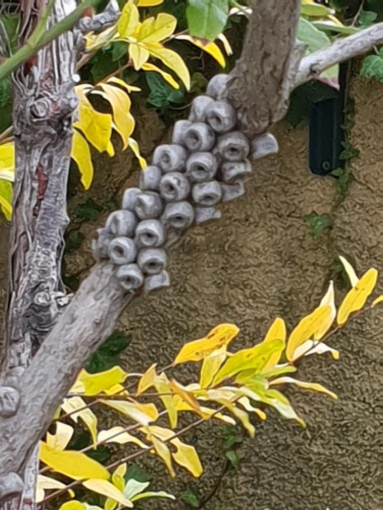 Die Fontanilles. Der Park: Callistemon vor der Blüte